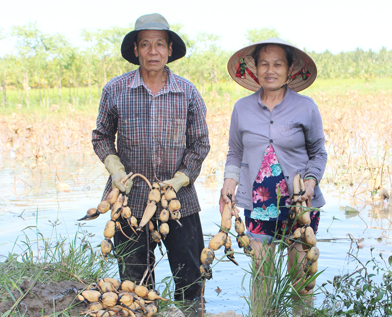 Vợ chồng ông Huỳnh Văn Bá rất mừng vì đã có người mua củ sen. Ảnh: H. Đức