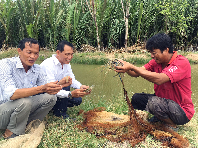 Mô hình nuôi tôm càng xanh thuộc Dự án AMD tại xã Mỹ An, huyện Thạnh Phú.