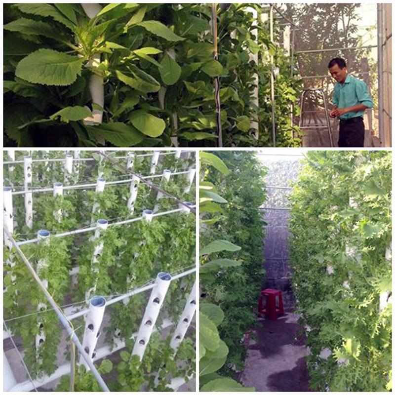 Mô hình trồng rau an toàn bằng phương pháp thủy canh trụ đứng.