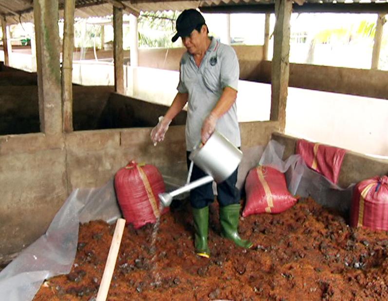 Thực hiện ủ phân hữu cơ từ phân heo có bổ sung vi sinh tại nông hộ.