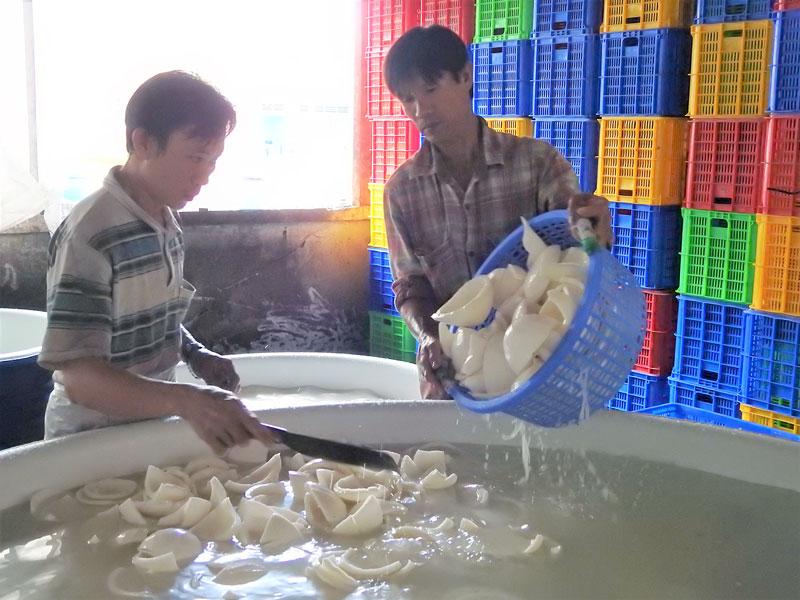 Công nhân sơ chế dừa tại Hợp tác xã Nông nghiệp Định Thủy (Mỏ Cày Nam).