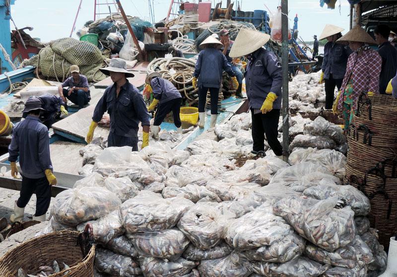 Ngư dân vận chuyển hải sản lên bờ tại cảng cá Bình Thắng. Ảnh: P. Tuyết