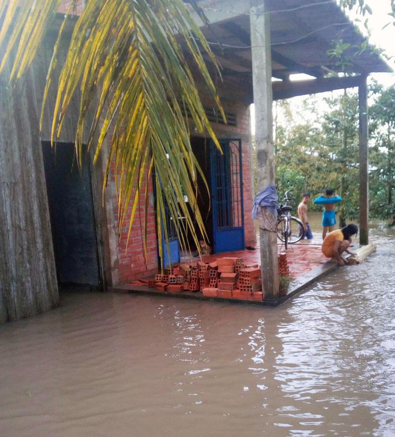 Vỡ đê bao, triều cường nhấn chìm vườn cây ăn trái, nơi ở của người dân ở Tân Phú. Ảnh: Trúc Lan