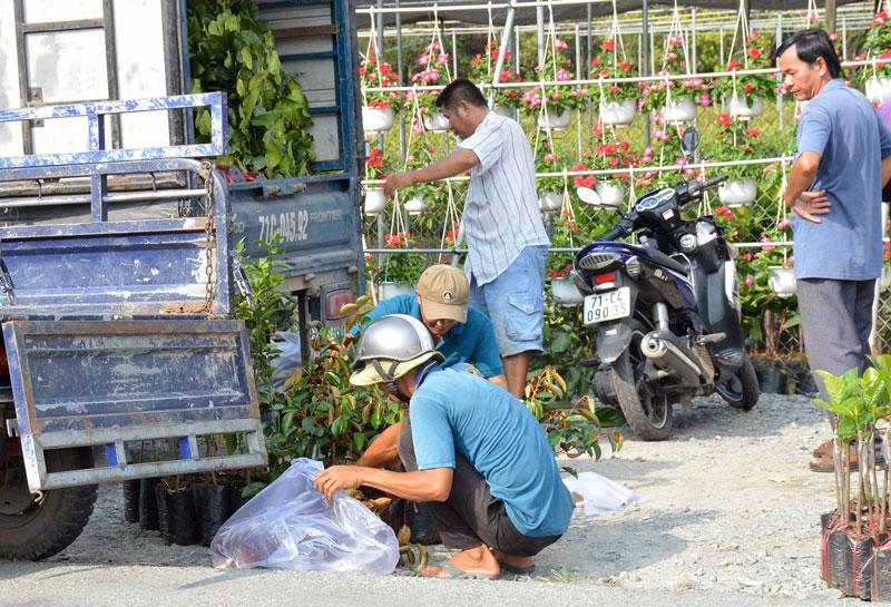 Sản xuất cây giống góp phần giải quyết việc làm, tăng thu nhập cho người dân địa phương. Ảnh: M.An
