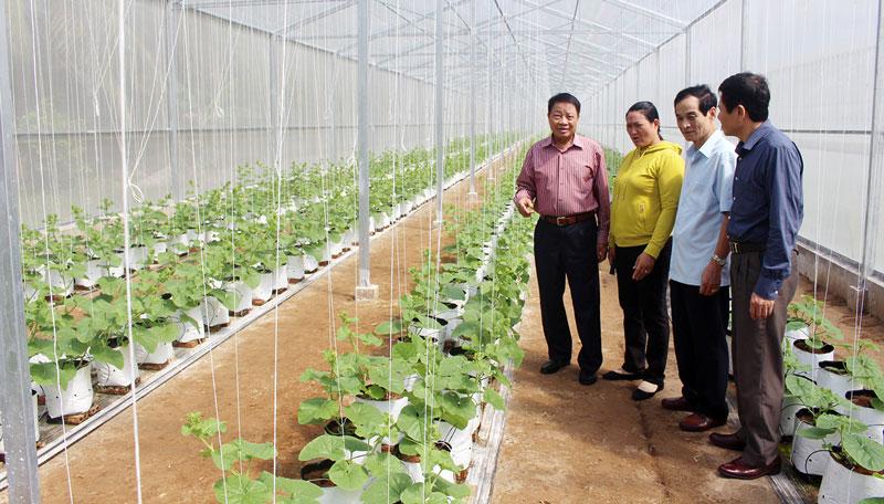 Đoàn tham quan mô hình trồng dưa lưới tại ấp Bình An, xã Châu Bình.