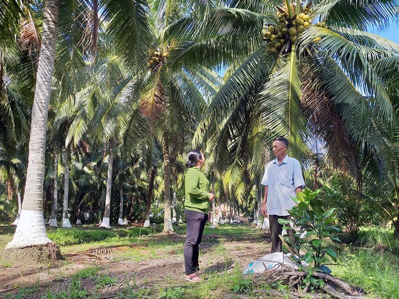 Cán bộ khuyến nông xã Hương Mỹ trao đổi với nông dân về kỹ thuật trồng, chăm sóc dừa hữu cơ.