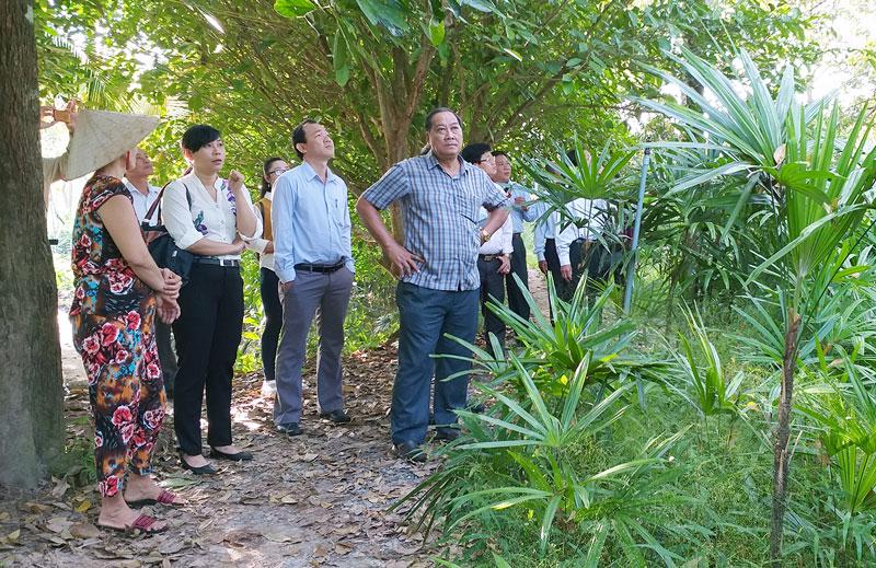 Đoàn khảo sát thực tế tại điểm du lịch sinh thái Bảy Thảo, xã Vĩnh Thành, huyện Chợ Lách.