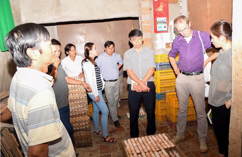 Đoàn Dự án AMD khảo sát cơ sở ấp gà con ở xã An Hiệp, huyện Ba Tri.  Ảnh: V. Tiến