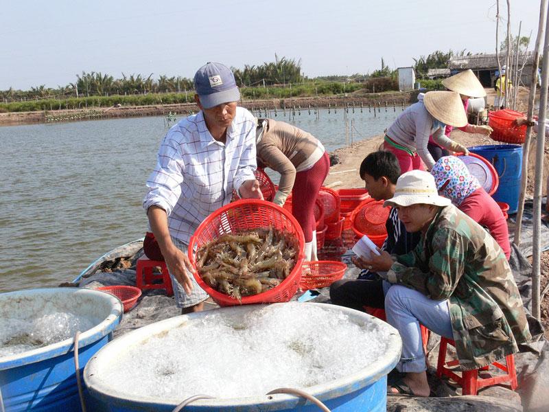 Nuôi thủy sản tiếp tục được xác định là kinh tế mũi nhọn của huyện. Ảnh: H.Hiệp