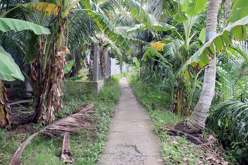 Hàng rào do ông Phước lấn chiếm đất công đã làm hẹp đường đi, không thể mở rộng làm lộ bê-tông 2m. Ảnh: H.Đ