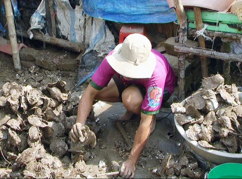 Mô hình nuôi hào thương phẩm góp phần giúp nhiều hộ thoát nghèo.