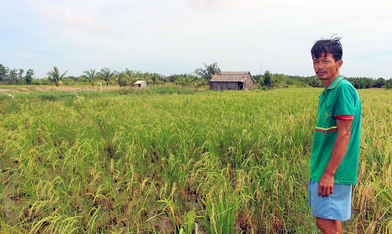 Nông dân Nguyễn Văn Tuấn bên ruộng lúa đã bán khi lúa đang trổ đòng.