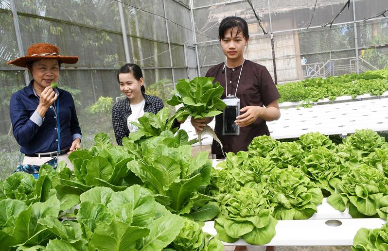 Du lịch nông nghiệp công nghệ cao ở Khu du lịch Phú An Khang. Ảnh: H.Hiệp