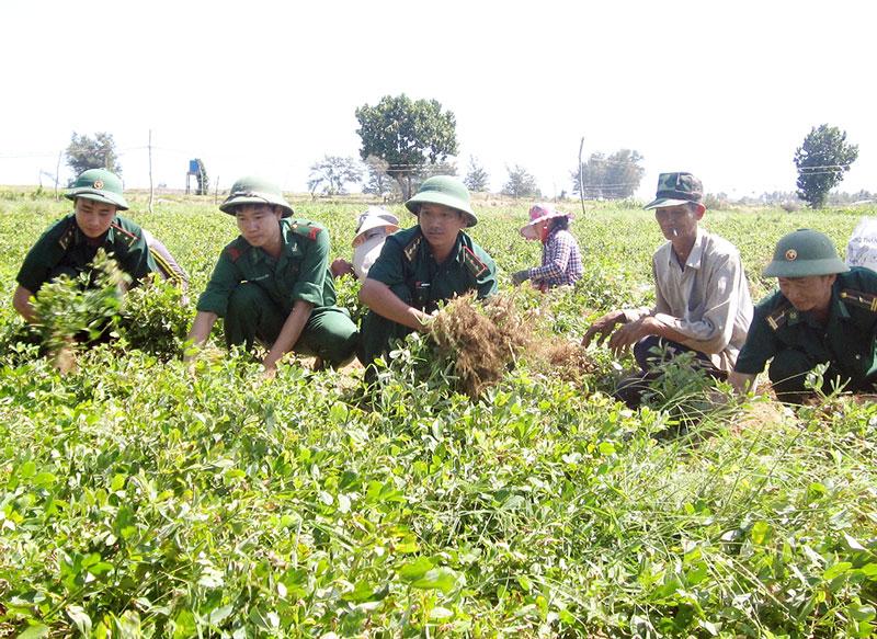 CBCS Đồn BP Cổ Chiên phụ giúp nhân dân trồng tỉa hoa màu. Ảnh: H. Trâm