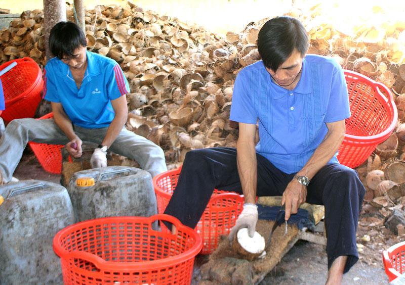 Nhân công nạy cơm dừa để sơ chế tại HTX. Ảnh: H. Đức