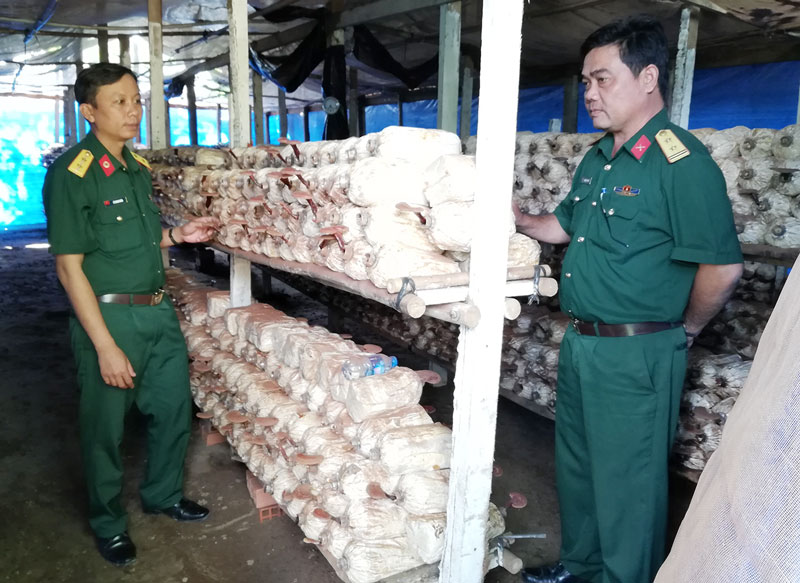 Mô hình trồng nấm linh chi của Ban Chỉ huy Quân sự TP. Bến Tre.