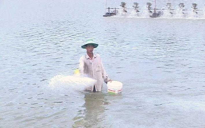 Nông dân xử lý ao để nuôi tôm theo khung thời vụ. Ảnh: T. Hương