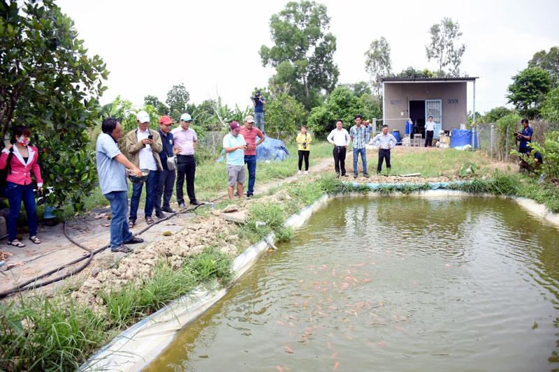 Tham quan mô hình bột cám gạo vi sinh nuôi cá koi không cần hệ thống sủi khí của anh Nguyễn Võ Công Sơn, huyện Lai Vung, tỉnh Đồng Tháp.