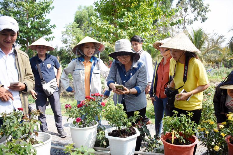 Tham quan mô hình trồng hoa hồng tại Làng hoa Sa Đéc.