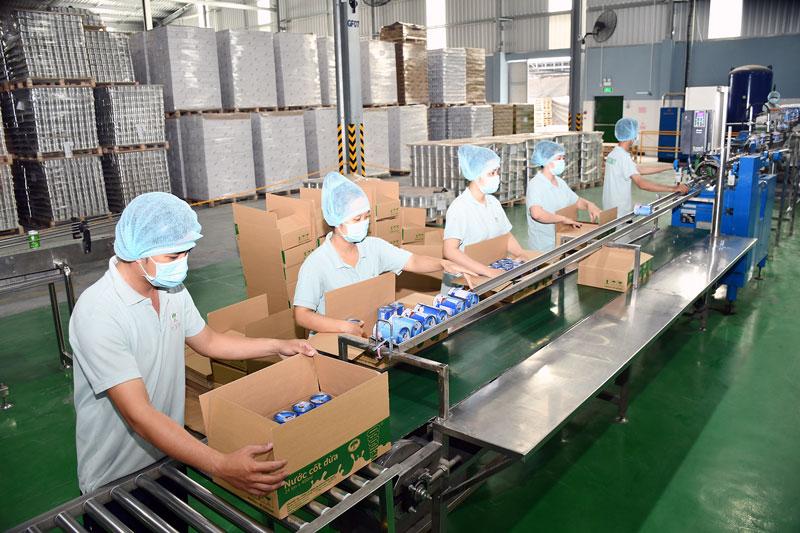 Dây chuyền sản xuất nước nước đóng lon của Công ty TNHH chế biến dừa Lương Quới. Ảnh: Hữu Hiệp