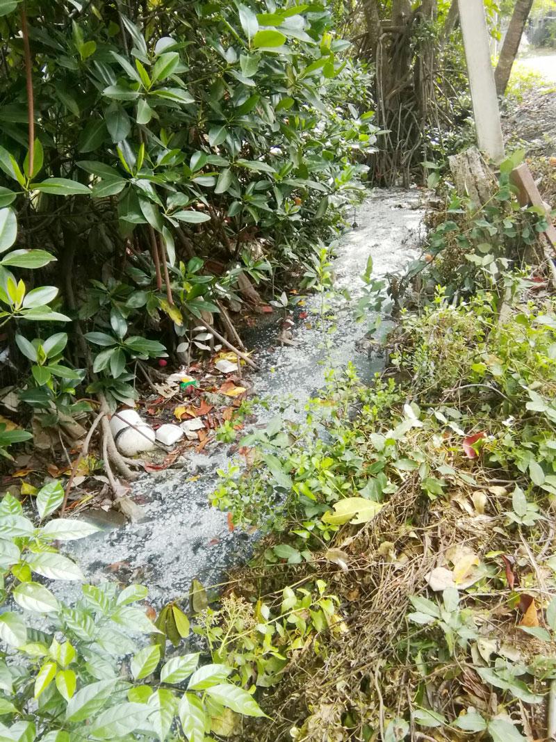 Nước thải do Công ty TNHH Trần Thảo xả ra có màu đen ngòm và bốc mùi hôi thối.