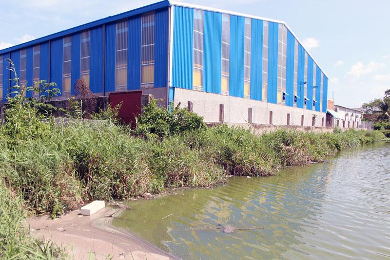 Ao cá của UBND xã Bình Thới nằm cạnh Công ty Trần Thảo bị ô nhiễm, nước có màu xanh bẩn và cá bị chết. Ảnh: PV