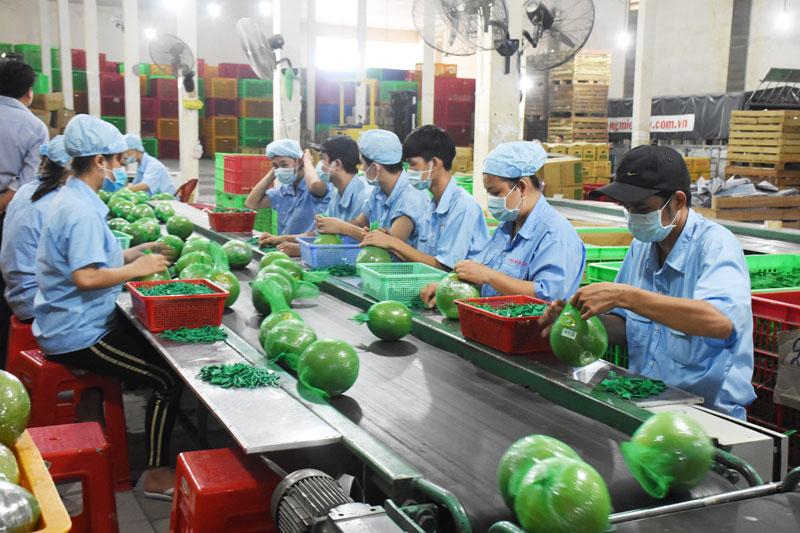 Chứng nhận sản xuất nông nghiệp tốt là một trong những điều kiện để sản phẩm chinh phục người tiêu dùng. Ảnh: C. Trúc