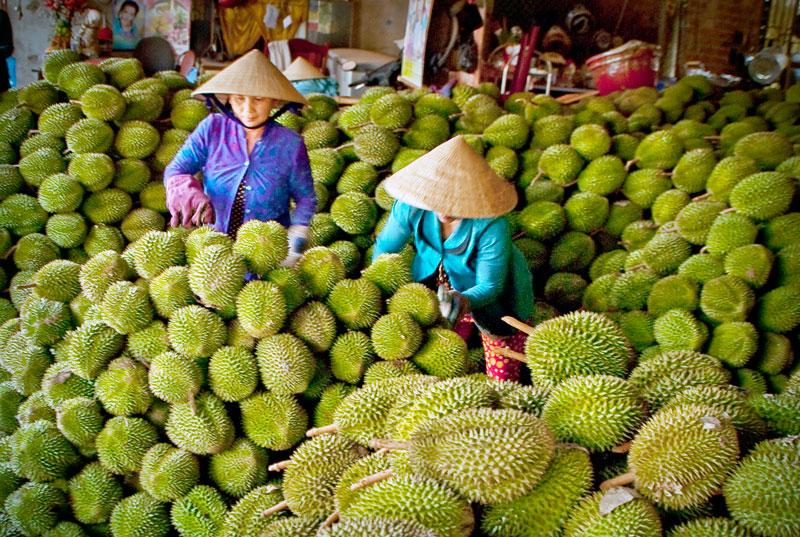 Mùa sầu riêng.  Ảnh: Nguyễn Dừa