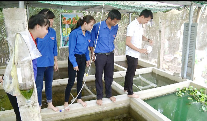 Nguyễn Thanh Huyền (áo trắng) đang hướng dẫn các bạn đoàn viên kỹ thuật chăm sóc cá cảnh.