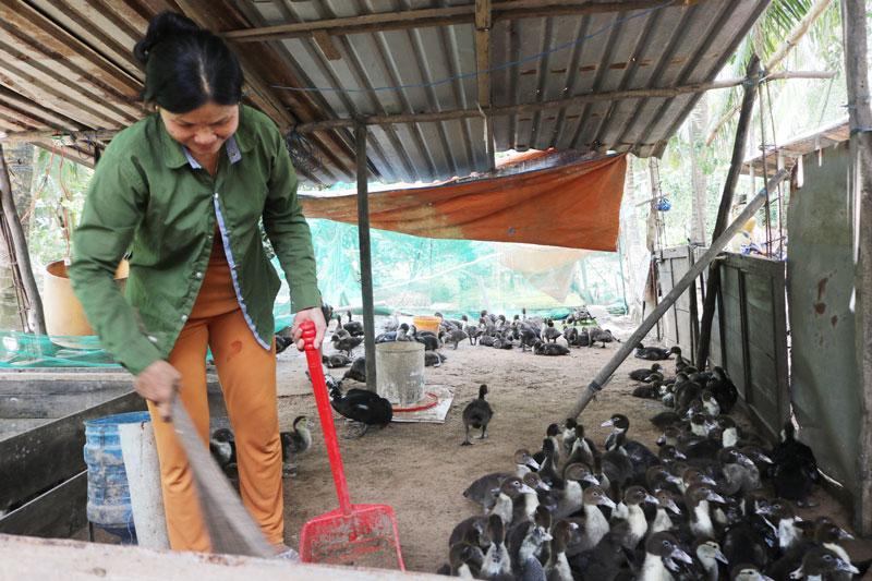 Bà Trần Thị Hồng chuyển sang nuôi vịt sau khi bị thiệt hại do dịch tả heo châu Phi.