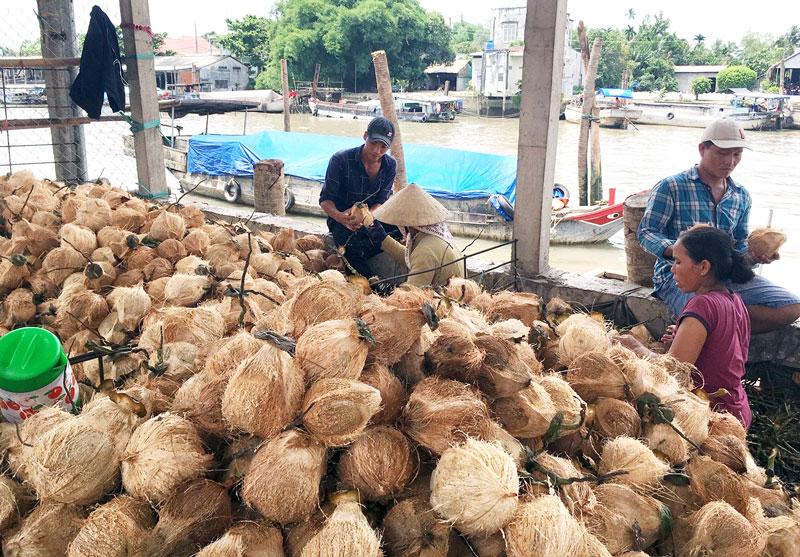 Nhiều lao động có việc làm từ khi có các làng nghề sản xuất chỉ xơ dừa dọc bờ sông Thom. Ảnh: H. Trung