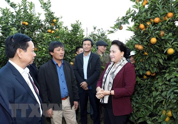 Chủ tịch Quốc hội Nguyễn Thị Kim Ngân thăm mô hình trồng cam tại xã Tây Phong, huyện Cao Phong. Ảnh: Trọng Đức/TTXVN