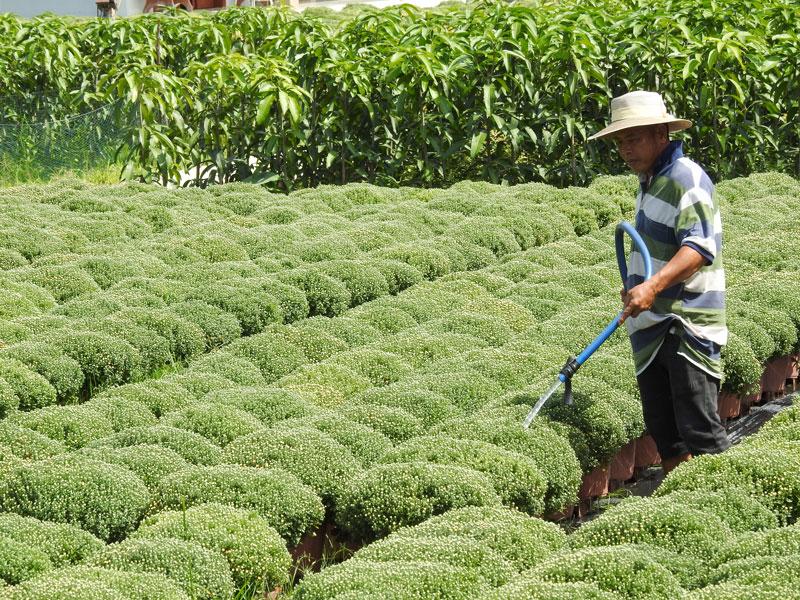 Người dân Chợ Lách cần cẩn trọng trong lấy nước tưới cho cây trồng, hoa kiểng vụ Tết 2020 trước tình hình xâm nhập mặn diễn biến phức tạp.
