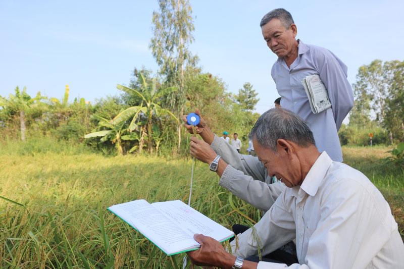 Đại biểu và nông dân tham dự sơ kết mô hình trình diễn lúa hữu cơ đi thăm đồng