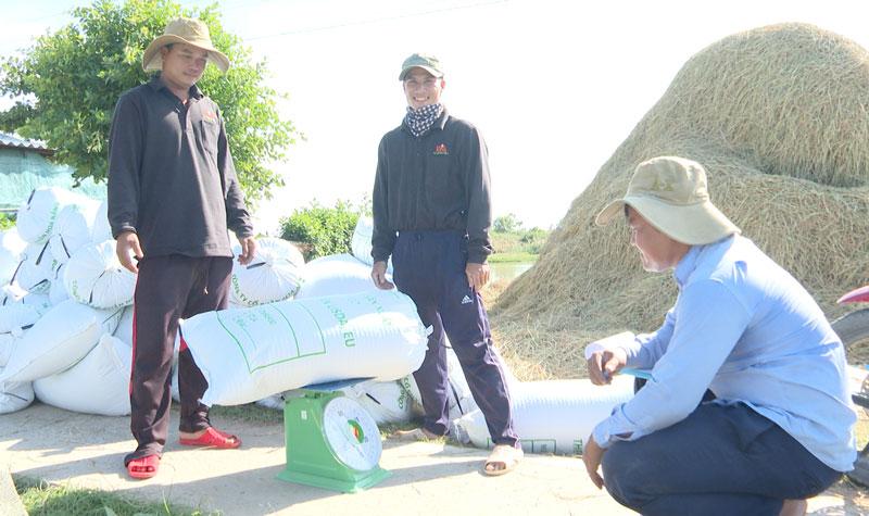 Giá doanh nghiệp thu mua lúa hữu cơ từ 8.500 đến 9.000/kg