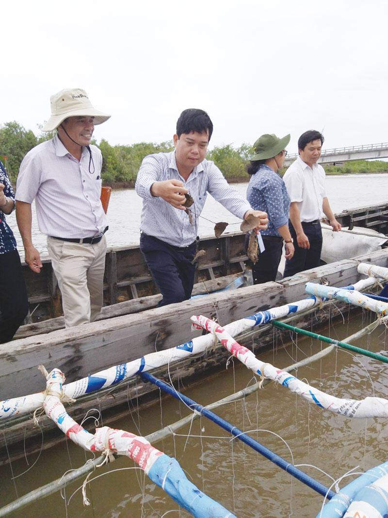 Giám đốc Sở Khoa học và Công nghệ Lâm Văn Tân khảo sát mô hình nuôi hàu ở huyện Ba Tri. Ảnh: Xuân Trang
