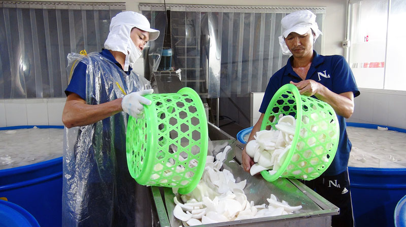 Chế biến sản phẩm cơm dừa nạo sấy.