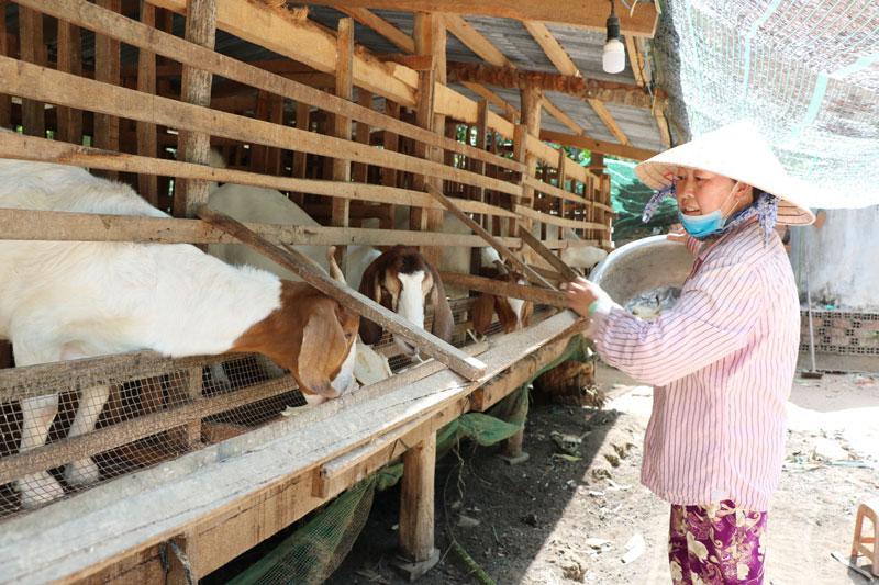 Chị Lê Hồng Nguyên thoát nghèo nhờ nuôi dê.