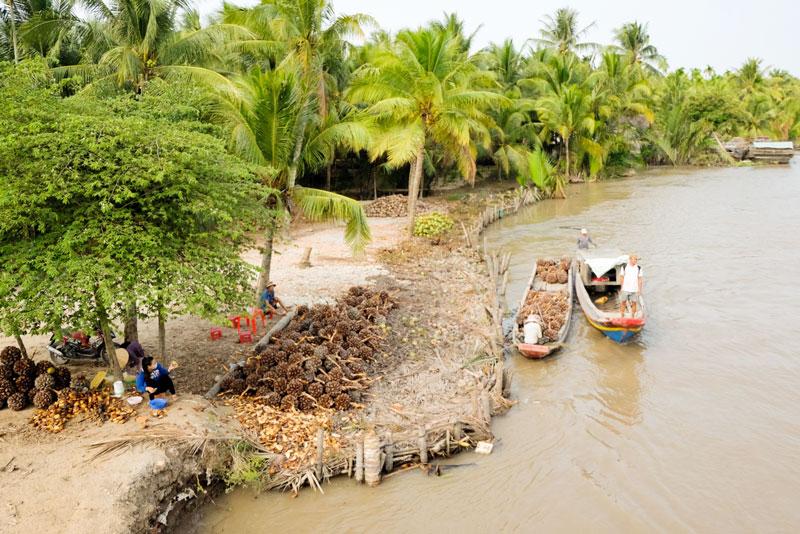Bến nước vườn dừa. Ảnh: Quốc Thi