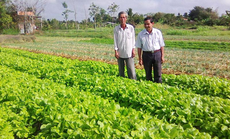 Mô hình trồng rau an toàn của THT sản xuất rau xã Tân Thủy.