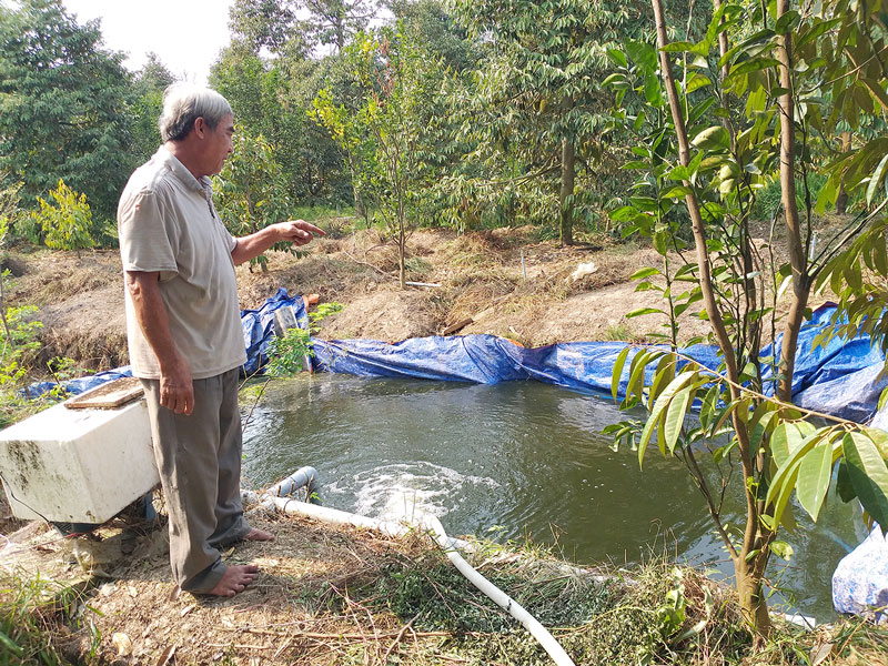 Ông Nguyễn Văn Bé ở Tổ 6, ấp Tân Qui đang bơm nước ngọt vào mương để tưới cho cây sầu riêng.