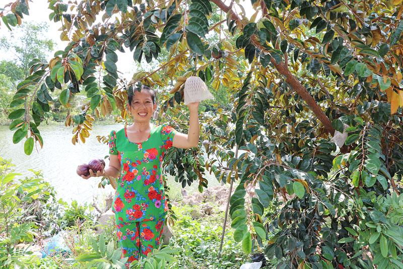 Vú sữa Mica không mủ trồng tại vườn nhà chị Bùi Ngọc Lan.