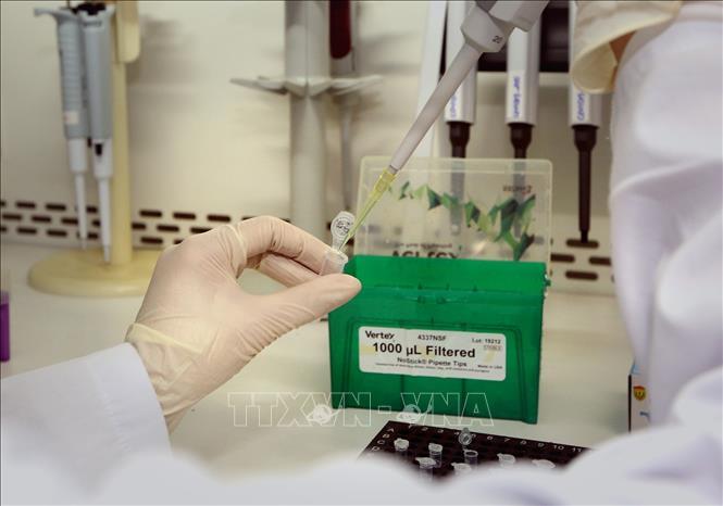 Test xác định virus SARS-CoV-2. Ảnh: Dương Giang/TTXVN