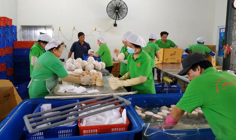 Sơ chế dừa xiêm xanh xuất khẩu.