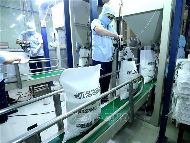 Đóng bao sản phẩm gạo xuất khẩu tại công ty Lương thực Sông Hậu (Sông Hậu Food), thành phố Cần Thơ. Ảnh: Vũ Sinh – TTXVN