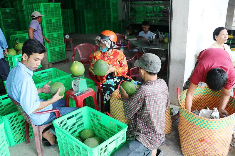 Các doanh nghiệp xuất khẩu nông sản cũng gặp nhiều khó khăn do tác động của dịch Covid-19. Ảnh: Thạch Thảo
