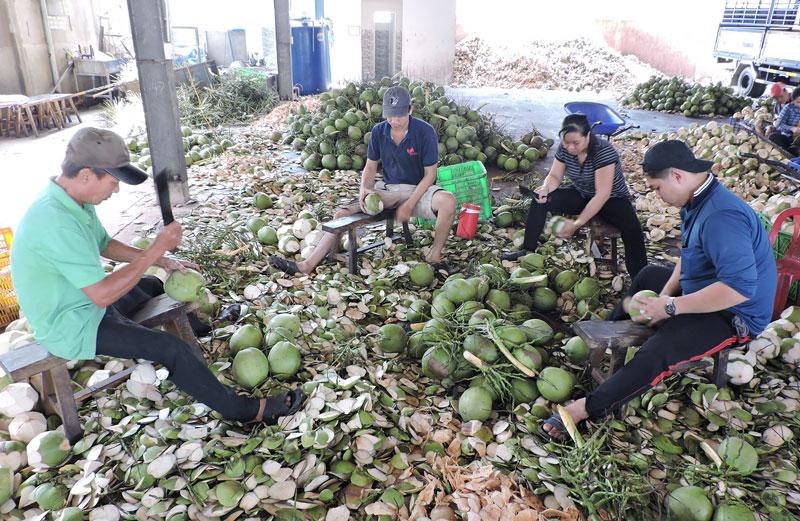 Hữu Định tập trung xây dựng chuỗi giá trị sản phẩm dừa xiêm xanh.