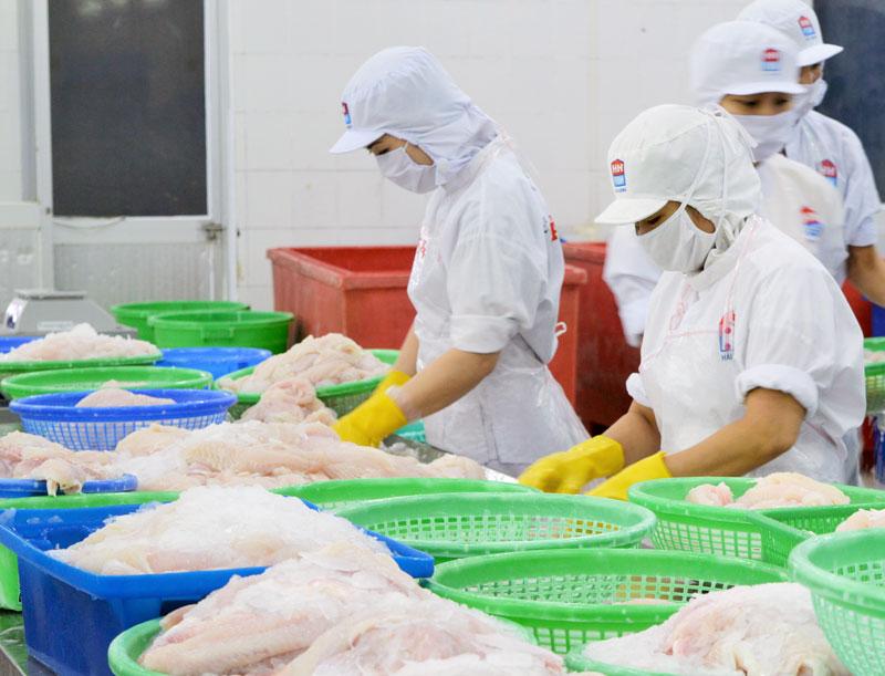 Công ty cổ phần Thủy sản Hải Hương, Khu công nghiệp An Hiệp, huyện Châu Thành chế biến cá xuất khẩu.