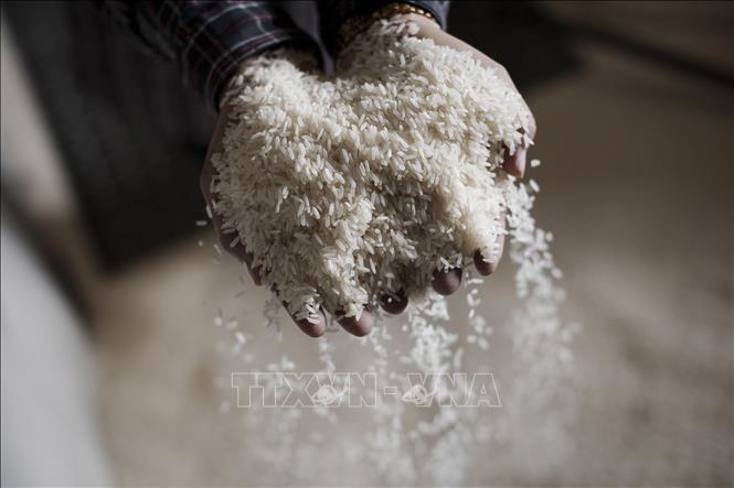 Malaysia đã ký hợp đồng nhập khẩu 100.000 tấn gạo từ Ấn Độ cho năm 2020. Ảnh: AFP/TTXVN