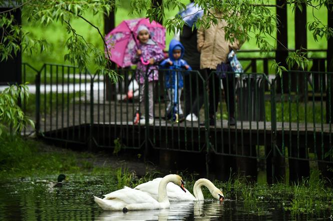 Người dân đi dạo trong một công viên ở ngoại ô Moskva, Nga ngày 31-5-2020. Ảnh: AFP/TTXVN